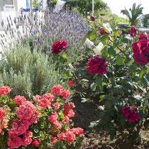 Die schönen Blumen