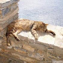 Amorgos: Klosterkatze