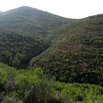 Dunkelgrüne Hügel
