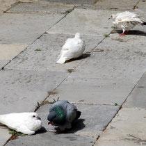 Wird auch von Tauben geschätzt