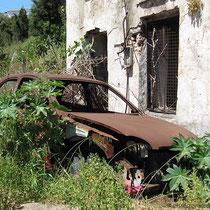 Auto wie verwachsen