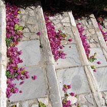 Blütenabfall