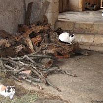 ...bewachen das Brennholz