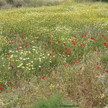 Blumenschmuck (Natur)