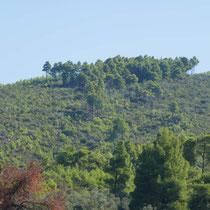 Hier sieht man noch, wo 2008 der Waldbrand gewütet hat
