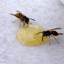 Frühstück für Bienen