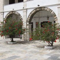 Hibiskusbäume