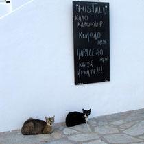 Hier grüßen sogar die Katzen