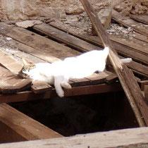 Kreta: Siesta