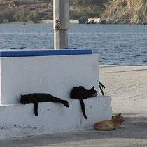 Da hängen die Katzen herum...