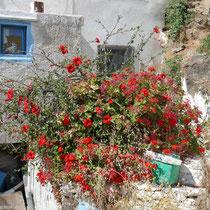 Blumengeschmückt