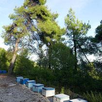 Bienenstockkette