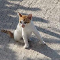 Verspieltes Kätzchen