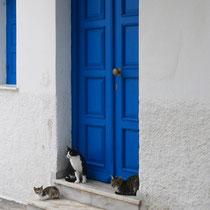 Katzen hat es in Naoussa reichlich