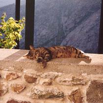 Serifos: Schlafende Katze