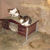 Tierische Hausbesetzer...