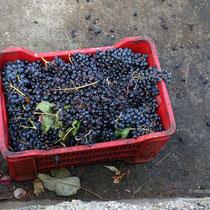 ....Wein produziert.
