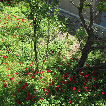 Garten in Xylosyrtis