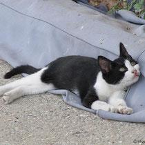 ... und ne entspannte Katze