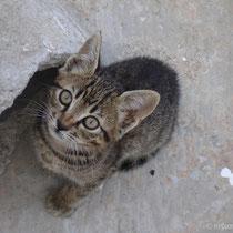 Karpathos: Kätzchen
