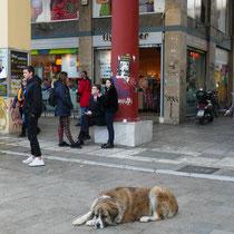 Die schlafenden Straßenhunde ....