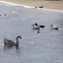 Amorgos: Geflügel