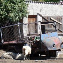 Kreta: Agia Roumeli