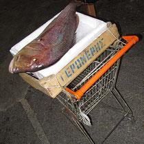 Noch mehr Fisch