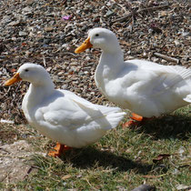 Donald und Daisy?