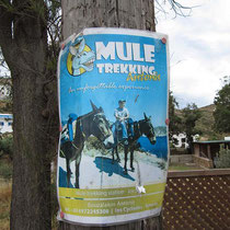 Muli-Trekking?