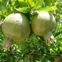 Chalki: Granatäpfel