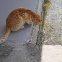 Fischorientierte Katze