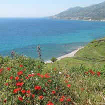 Blick nach Westen entlang der Küste
