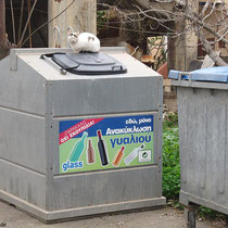 Saubere Mülltrennung