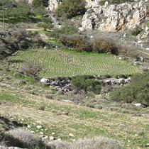 Steiniges Feld