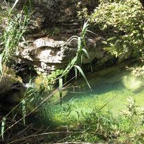 Grüne Becken