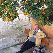 Theo unter Orangen