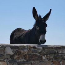 Es gibt noch Esel auf Paros