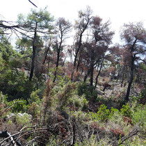 Lichter Wald