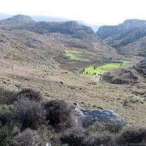 Ein grünes Feld