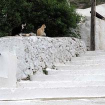 Stufenkatzen