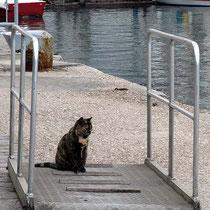 Reiselustige Katze?