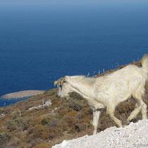 Ziegen und Touristen müssen draußen bleiben