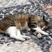 Katze in Tarnfarben