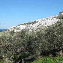 Olivenhais und Chora