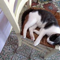 Und die Katzen fühlen sich hier auch wohl
