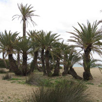 Und natürlich die Palmen