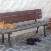 Bank für die Katz