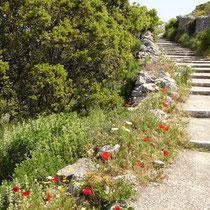 Amorgos: Stufenweg mit Blumen