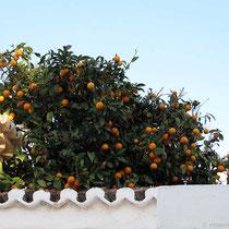 Mhh, Orangen...
